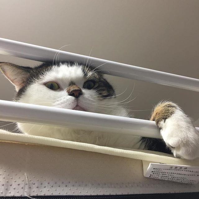 (;´Д`)#cat #catsofinstagram